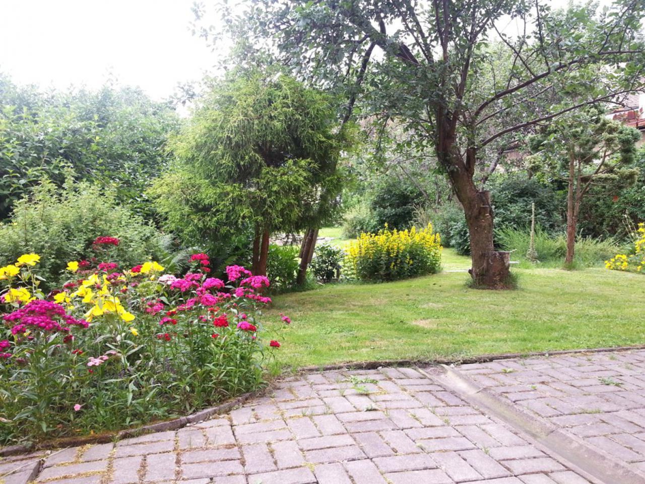 Ogród 20150706_130857